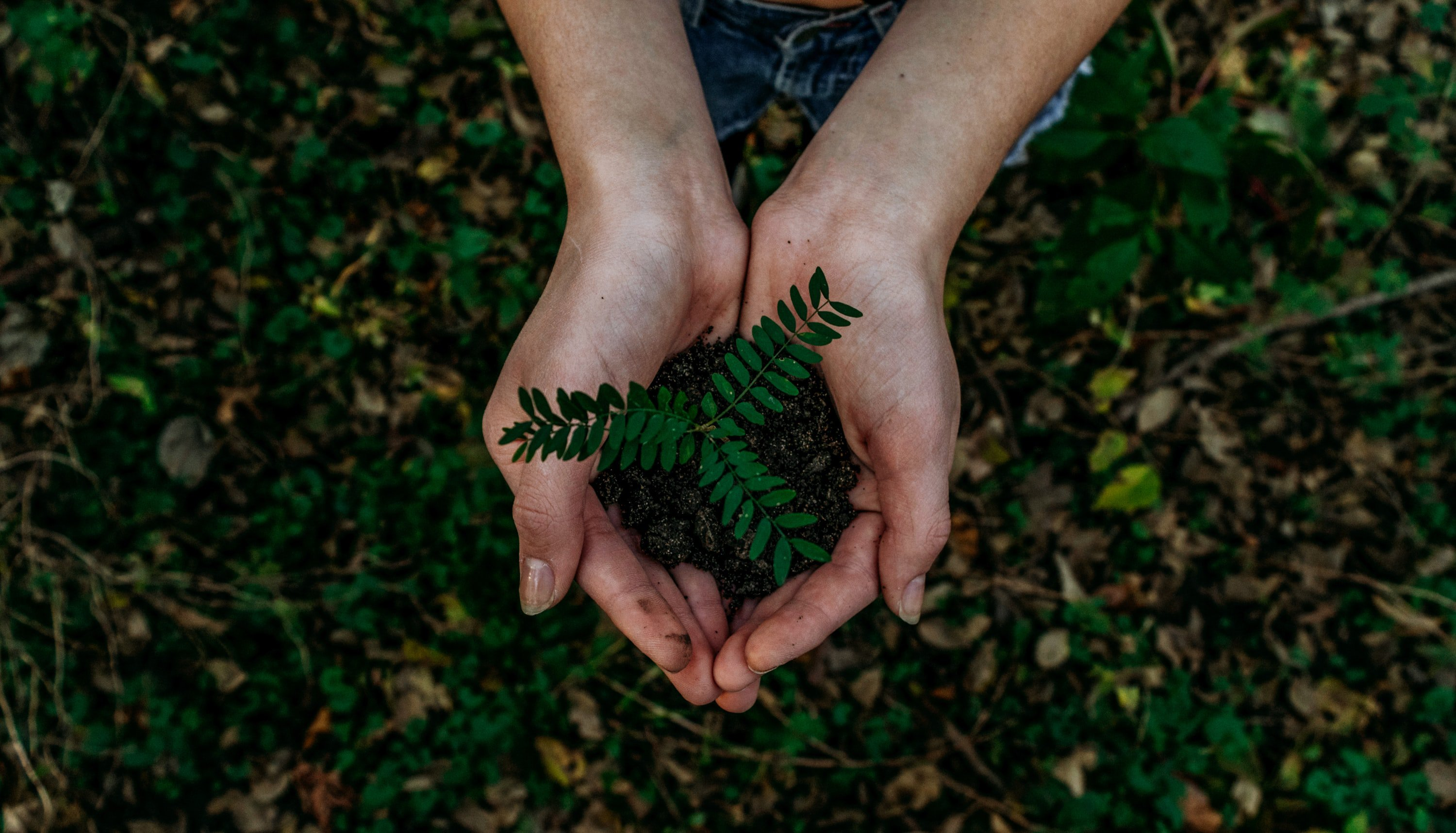 Why Should Pentecostals Care for Creation?